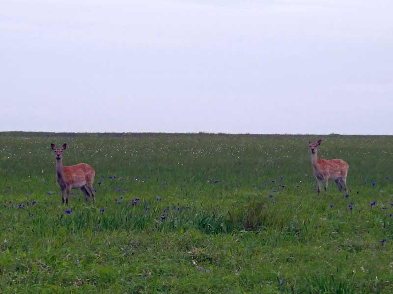 EHW_28_Deer