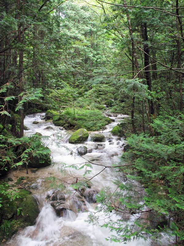 White rapids and forest in Tsumago