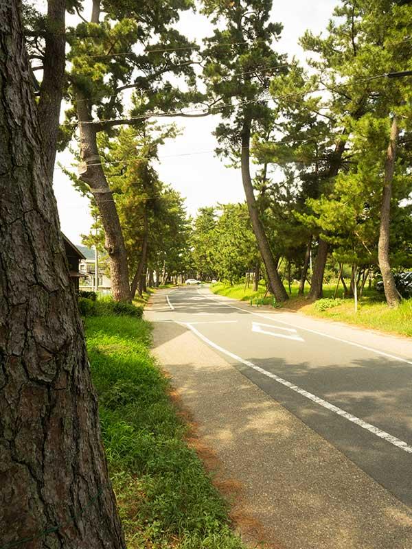 TKT_04_Goyu_namiki_trees.jpg