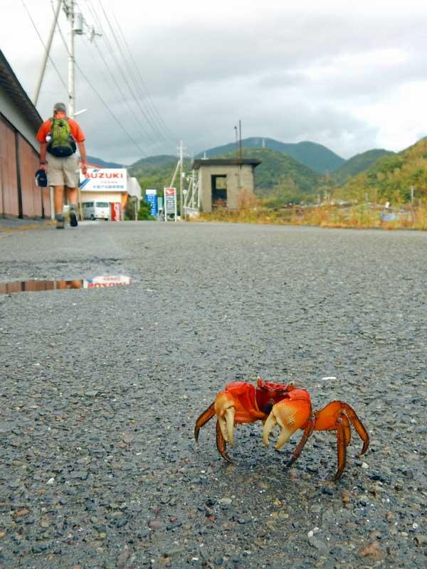 STP_crab.jpg