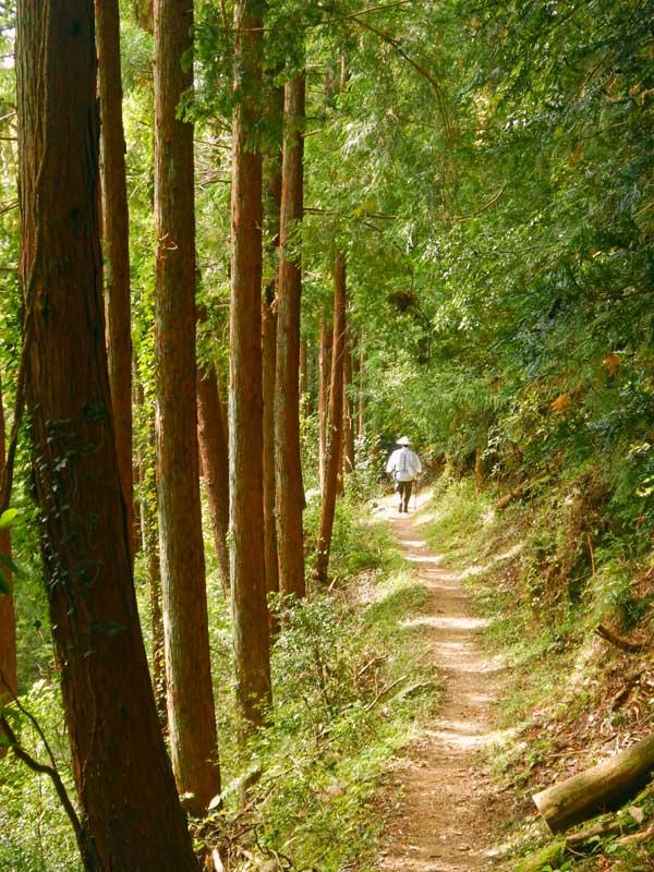 STP_henro_forest.jpg