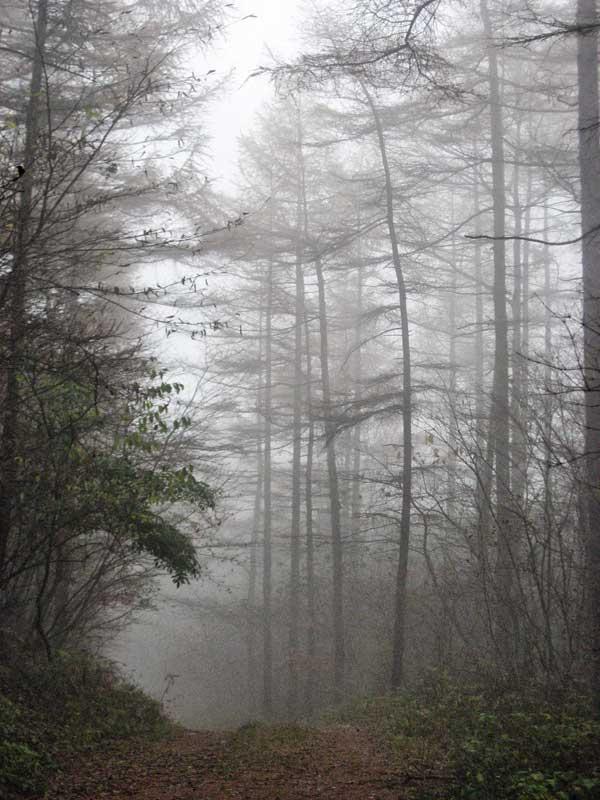 NW Karuizawa