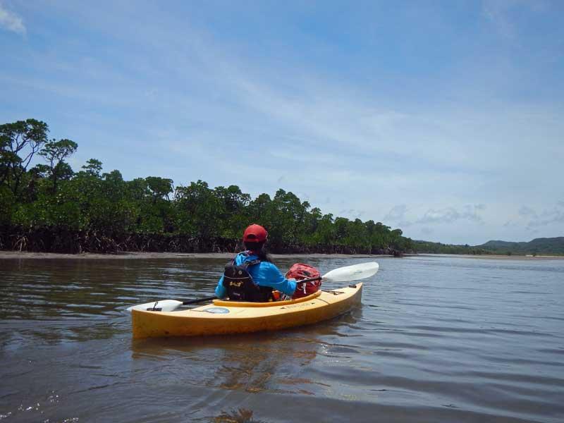 YOV_iriomote_mangrove.jpg