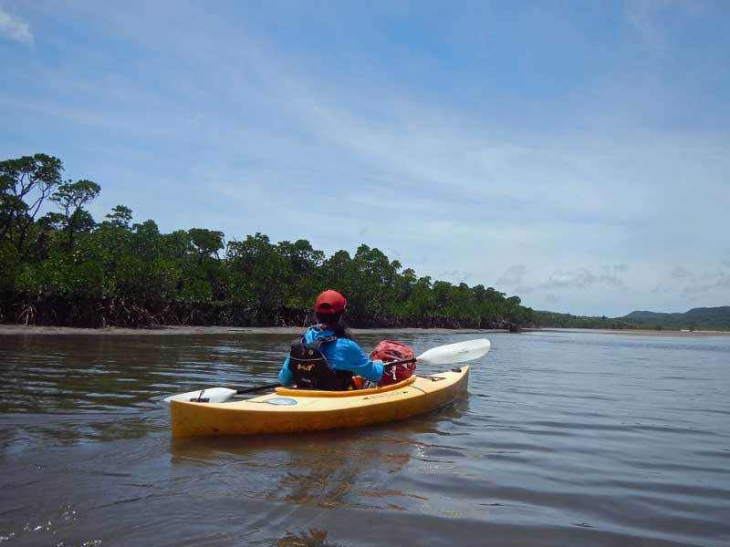 YOV Iriomote mangrove