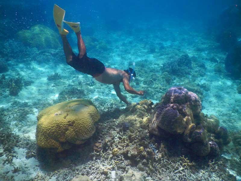 YOV Iriomote snorkelling