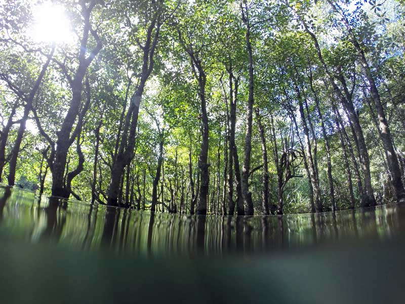 YOV_mangrove_water_level.jpg