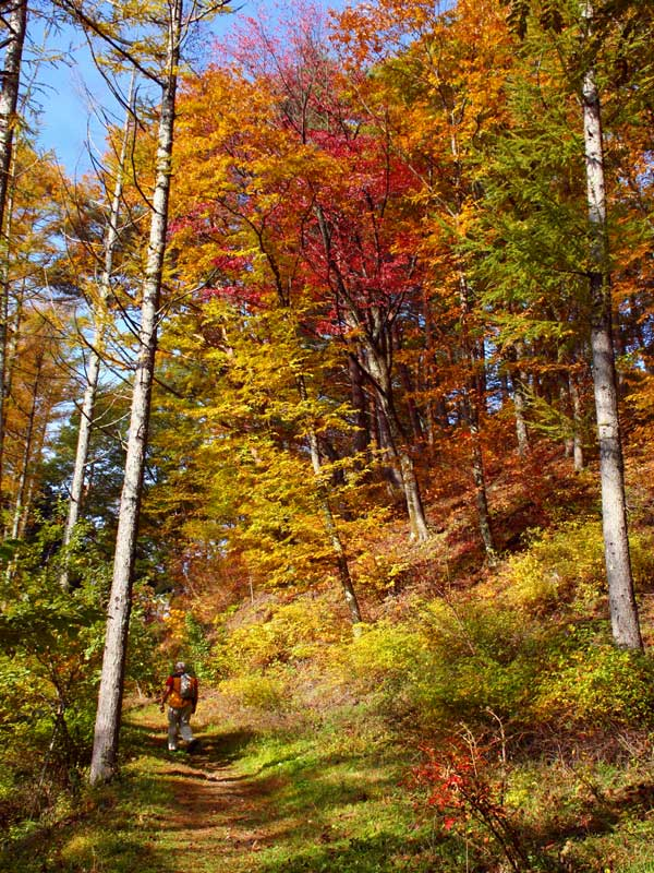 NWW_yabuhara_autumn.jpg