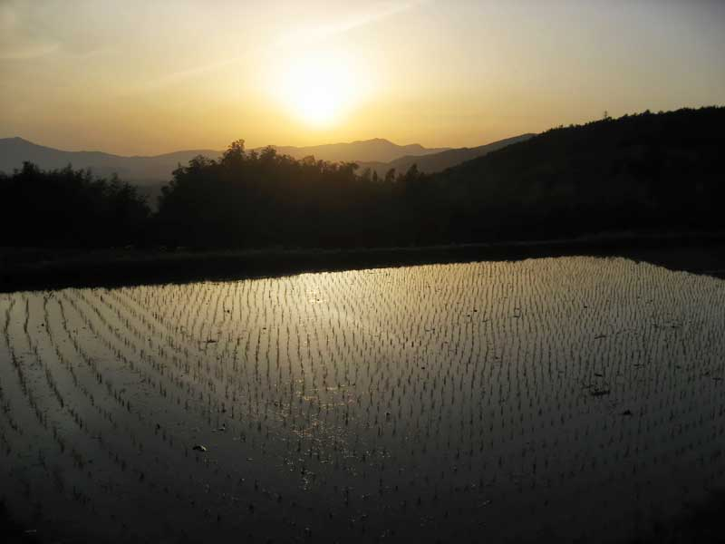 flooded rice paddy with evening sun reflection