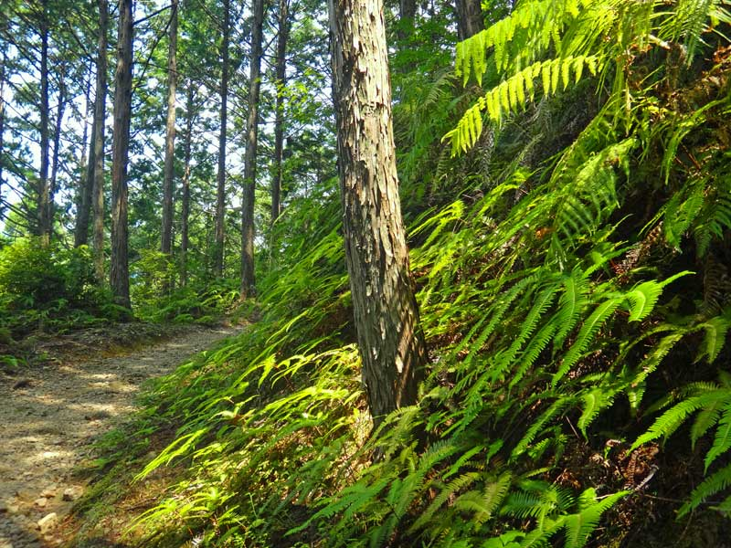 KKP Trail 02