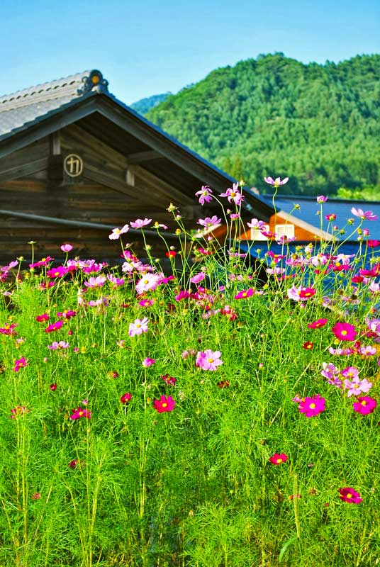 SNW_Kaida_flowers.jpg