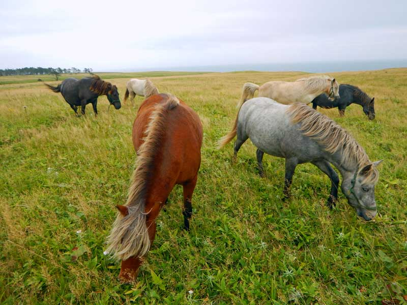 EHW_21_Horses 02