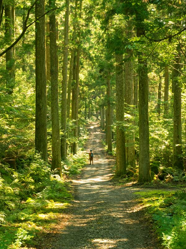 IGT Odoriko trail