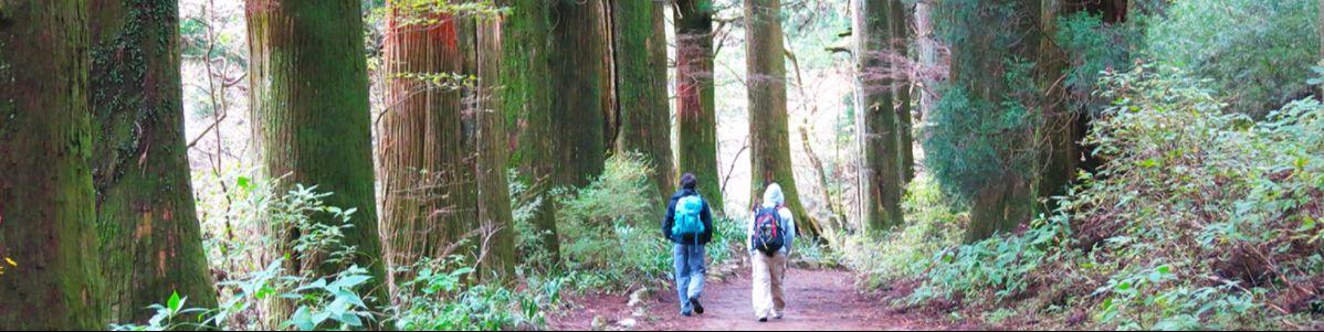 TKT_15_Hakone_namiki_trees.jpg