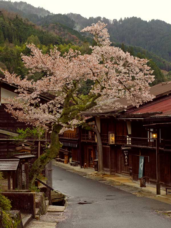NWW_tsumago_cherry1.jpg