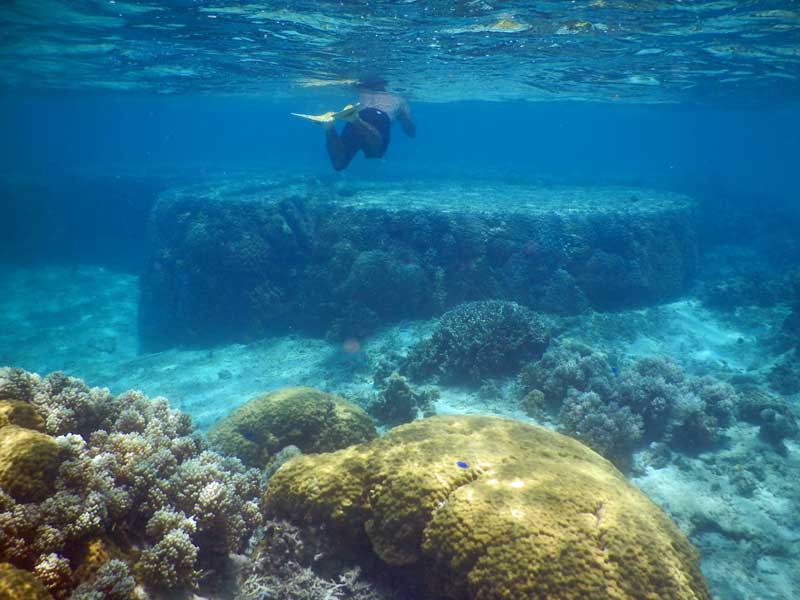 YOV Iriomote coral