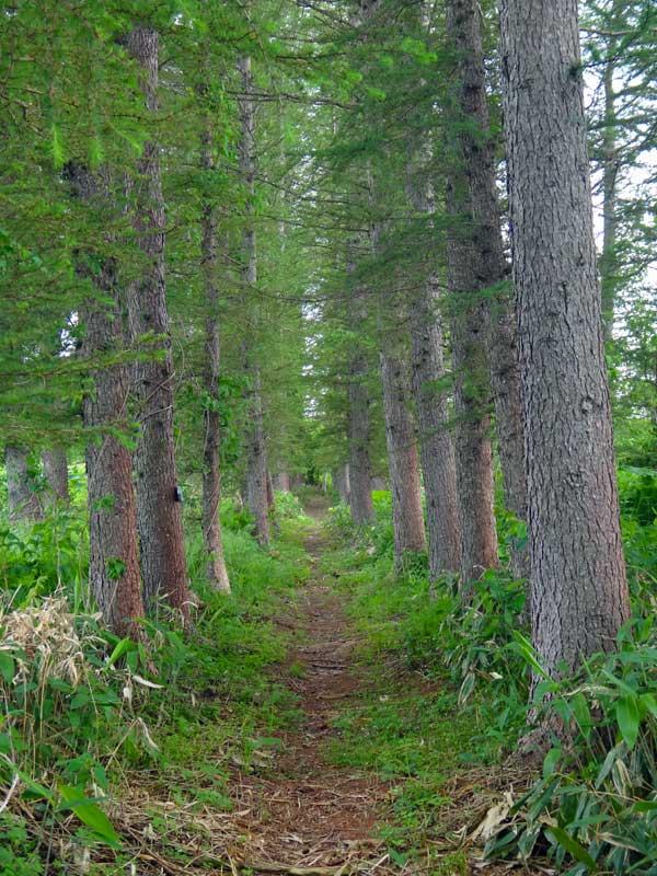 EHW_06_Trail 02