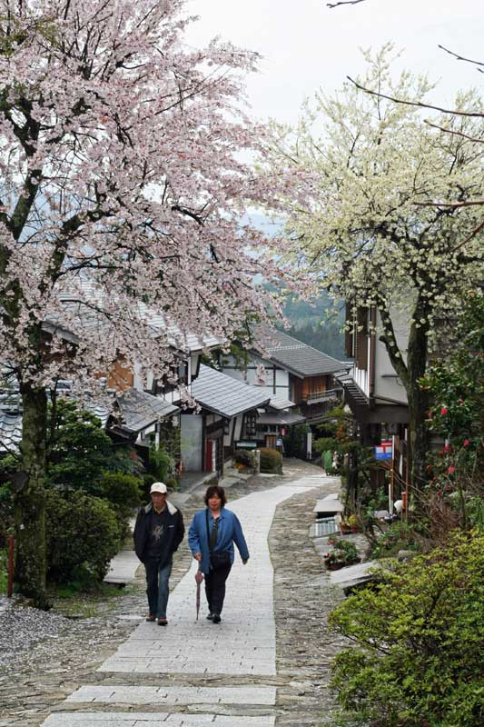 walkers and sakura over trail in magome post town