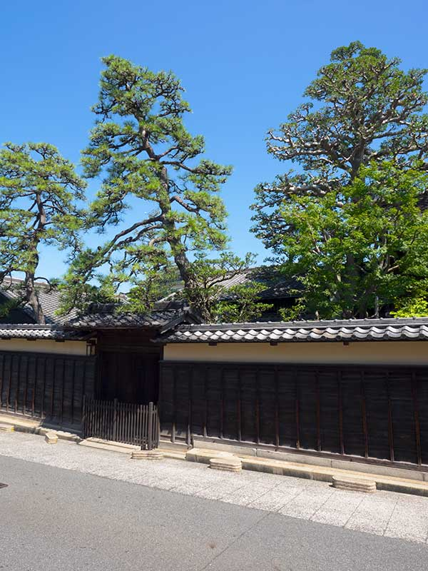 TKT_22_Arimatsu_pine_trees.jpg