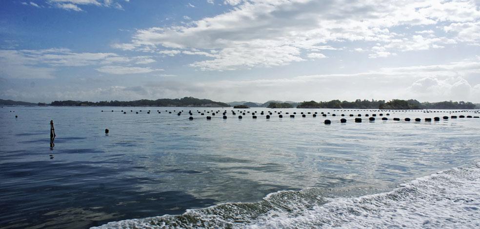 BT Matsushima bay