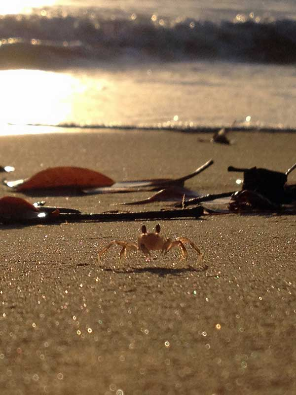 YOV_28_Ghost crab